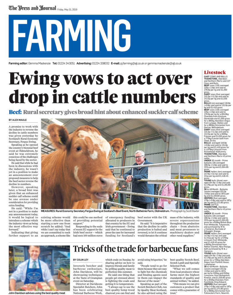 Fergus Ewing SNP visits a cattle show - pictured here with a cow in the foreground while he looks over a barrier